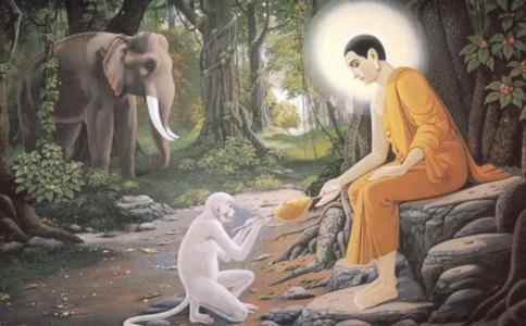 有幸遇到佛法就不要迷信